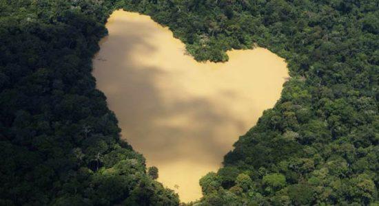 Governo decide revogar decreto que extinguia reserva ambiental