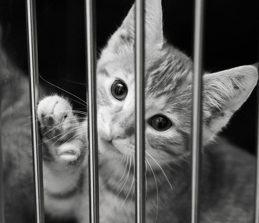 Cuidados ao adotar um animal de estimação
