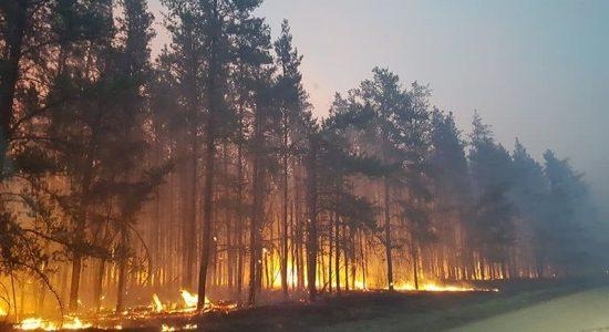Rapaz de 15 anos provocou um incêndio florestal e terá que pagar multa de R$ 139 milhões