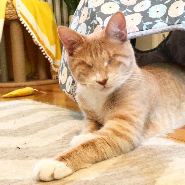 Bop, o gato cego que faz sucesso na internet