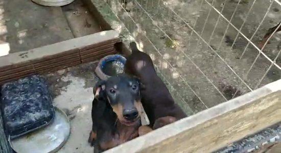Cachorros encontrados