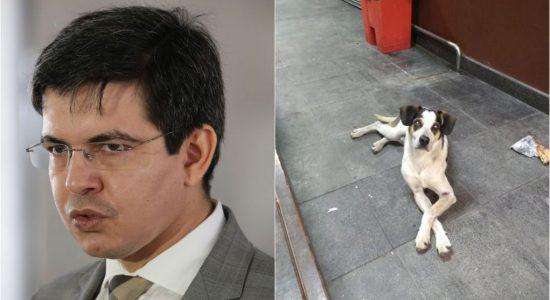 Senador Randolfe Rodrigues quer punição maior para quem comete maus-tratos contra animais