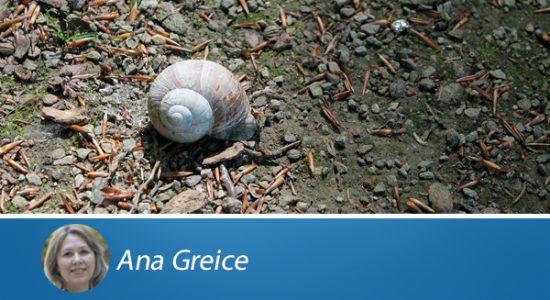 ANA-GREICE5