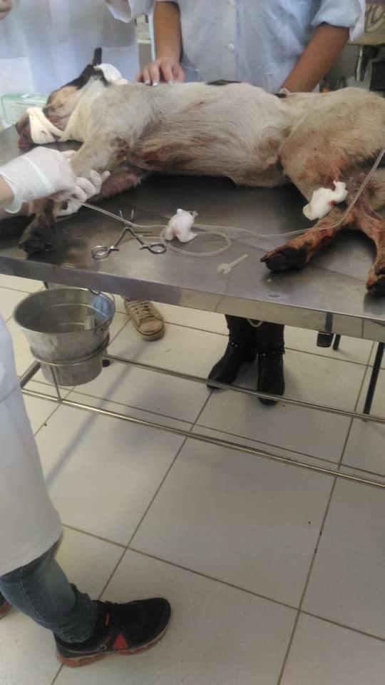 Cachorro é espancado por segurança de unidade do Carrefour, em Osasco, na Grande São Paulo