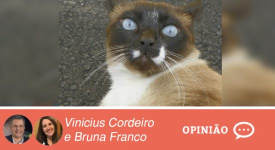 Opiniao-VINICIUS-E-BRUNA-15-02