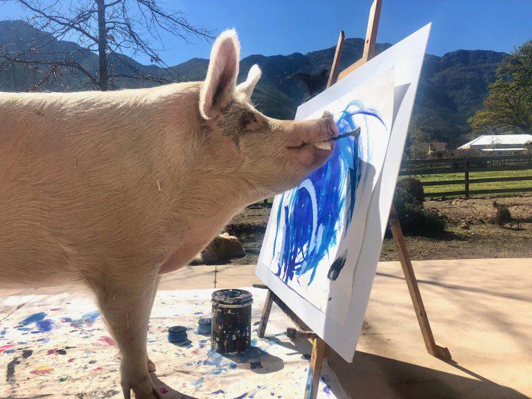 Pigcasso ganhou destaque por suas pinturas