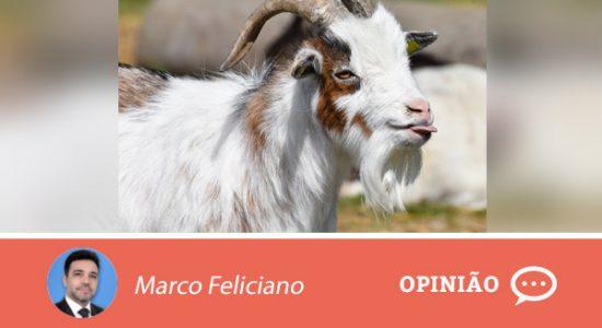 Opiniao-marco-6