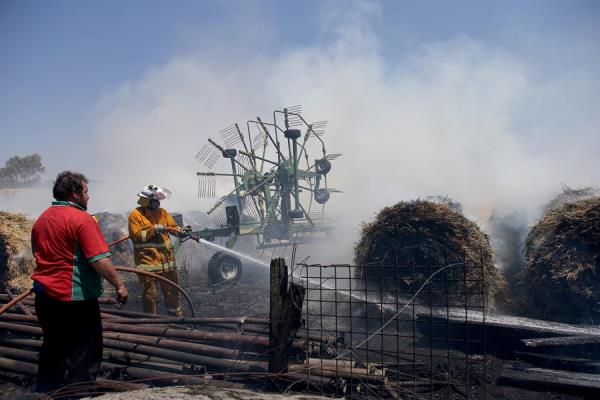 Incêndio na Austrália é quase 6 vezes maior do que no Brasil