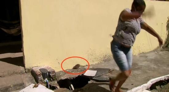 Ratazana invadiu link ao vivo de jornal da Globo