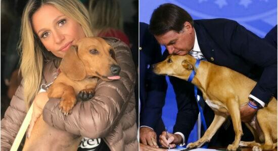 Luisa Mell agradece ao presidente Jair Bolsonaro por sancionar lei que aumenta punição contra maus-tratos a cães e gatos