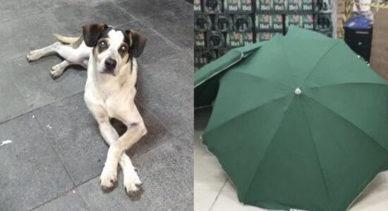 Cão agredido e morto e corpo abandonado são casos polêmicos do Carrefour