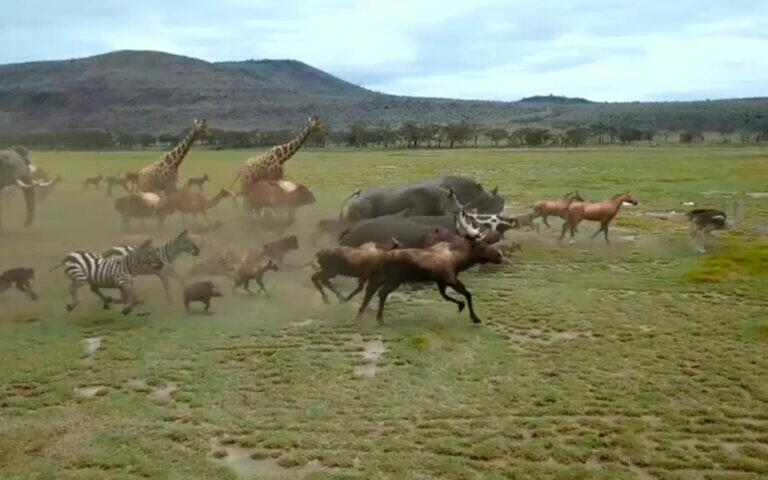Casais de inúmeras espécies de animais correm para entrar na arca