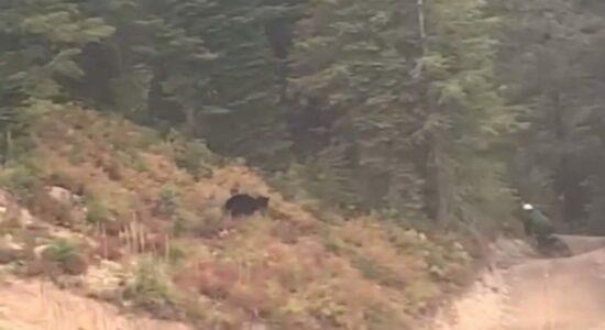 urso-ciclista-1280x720