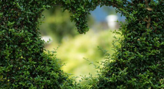 O amor é a resposta