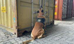 Cão ajudou a localizar mais de 300 kg de cocaína