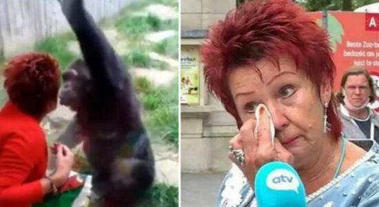 """Mulher é proibida de entrar em zoológico após """"caso"""" com chipanzé"""