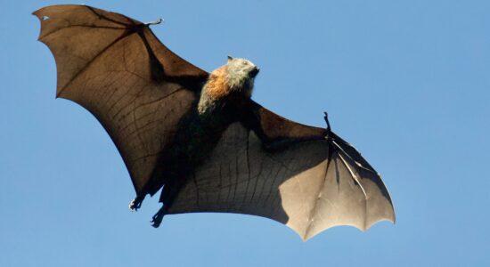 morcego james-wainscoat-_f8IZ0gGS6E-unsplash