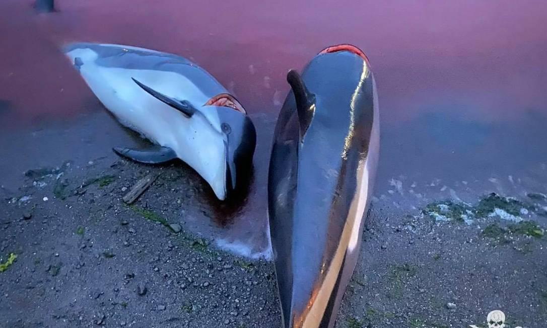 massacre de golfinhos na dinamarca